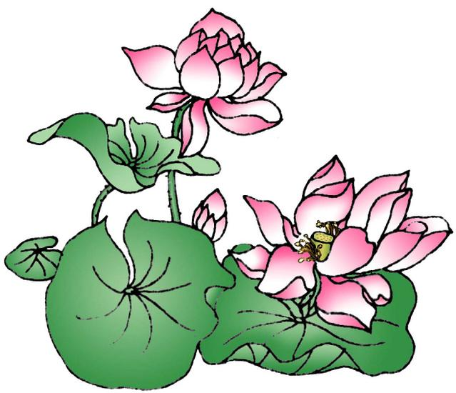 Graphic Design Lotus Flower